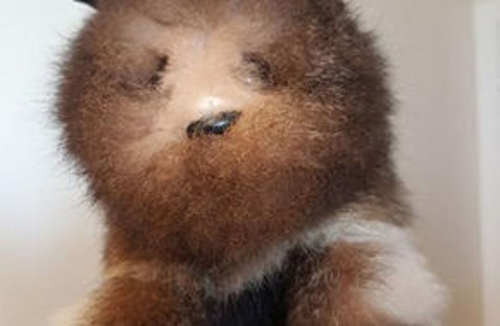Picture of Fur Puppet
